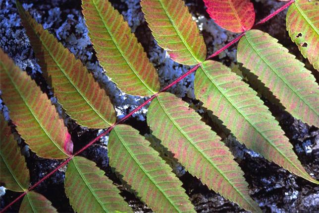 leaves-opt